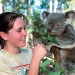 Bribane etudiante et koala