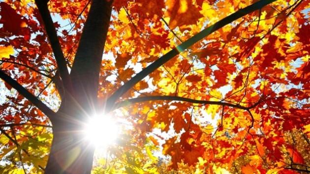 A la faveur de l 39 automne les couleurs pour un maquillage te - Les couleurs de l automne ...