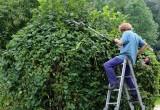 landscape-gardener-409147_960_720