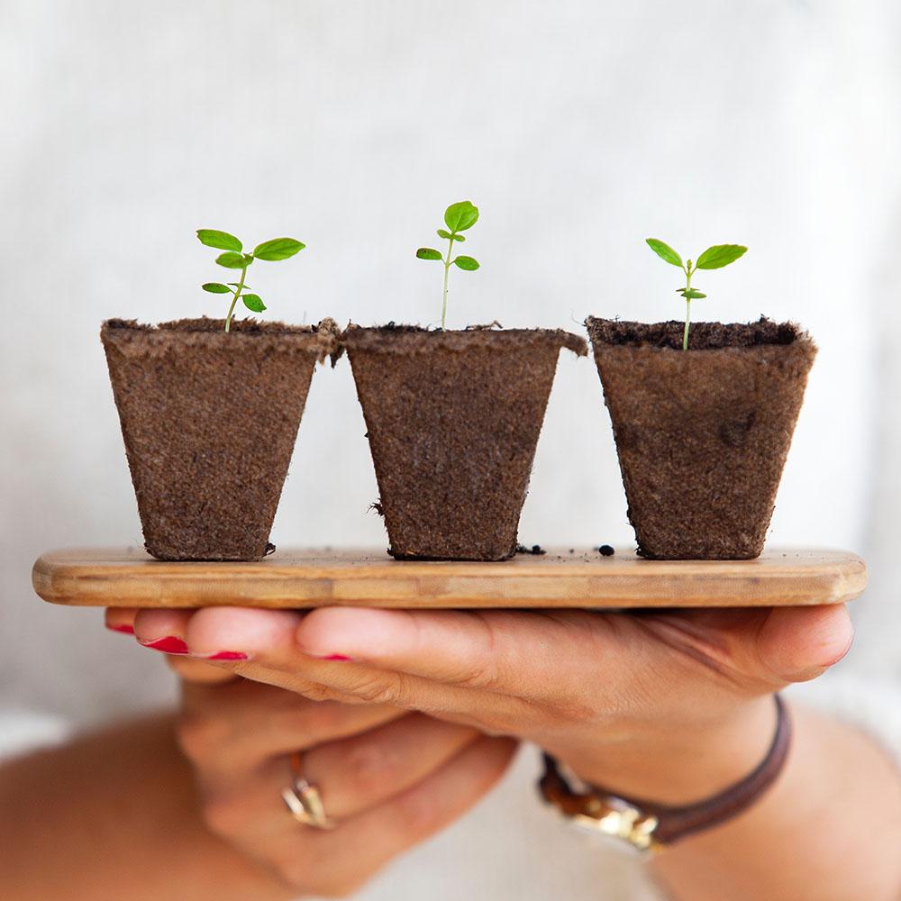 plantes à faire repousser