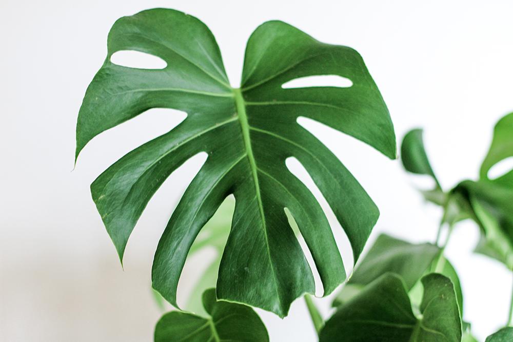 plantes à avoir en appartement