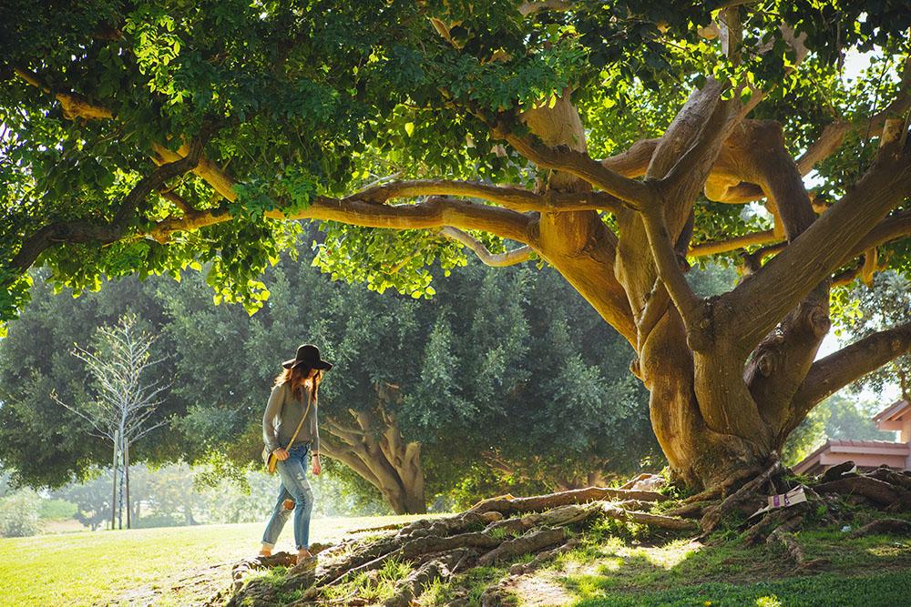 adopter un arbre