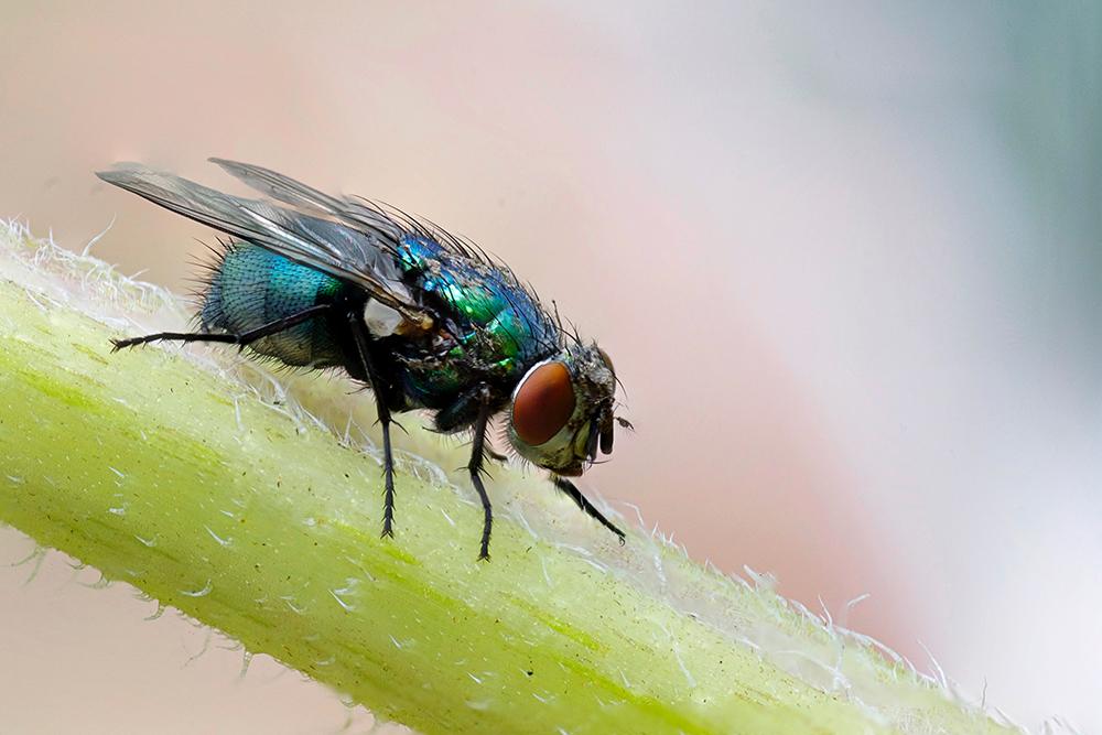 astuces naturelles contre les mouches
